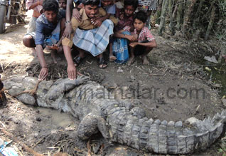 http://img.dinamalar.com/data/large/Tamil_News_large_414190.jpg