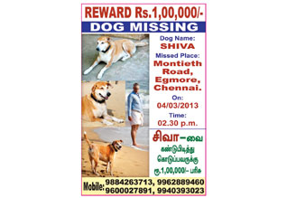 Rs. 1 lakh cash prize announced who found missed dog