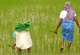 காவிரி, டெல்டா,மாவட்ட, பகுதி, 17.3, லட்சம்,ரூ.801 கோடி ,வினியோகம்,Rs. 801 crore, distribute,   Non cauvery delta, districts
