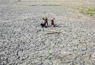 மகாராஷ்டிரா,  விவசாயிகள் தற்கொலை, Maharashtra ,farmer suicides