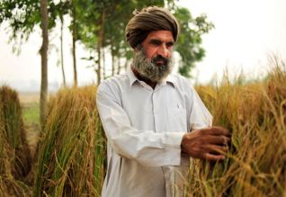 நெல், பருத்தி, சோயாபீன்ஸ், சோளம், விலை, மத்திய அரசு, புதுடில்லி, Paddy, cotton, soybeans, corn, price, Central government,