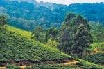 வன பகுதியாக மாறும் மாஞ்சோலை எஸ்டேட்! : 99 ஆண்டு கால குத்தகை முடிவுக்கு வருகிறது