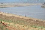 மேட்டூர் அணைக்கு நீர்வரத்து  கடும் சரிவு