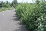 நெடுஞ்சாலையில் செடிகள்: தவிக்கும் வாகன ஓட்டிகள்