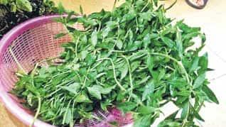 பொன்னாங்கண்ணி - 'கீரைகளின் ராஜா' E_1542951839
