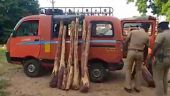 Tamil Celebrity Videos 1.5 டன் செம்மரக்கட்டைகள் பறிமுதல்