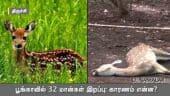 பூங்காவில் 32 மான்கள் இறப்பு: காரணம் என்ன?