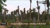 காய்ந்த தென்னை மரங்கள் : கண்ணீருடன் விவசாயிகள்