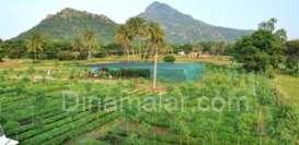 கிரிவலப் பாதையில் ஈஷா நாற்றுப்பண்ணை