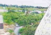 ஆறு, ஏரிகளில் கழிவுநீரை கலக்கும் பேரூராட்சி நிர்வாகம்:ஊத்துக்கோட்டையில் தான் இந்த கூத்து