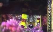 கோட்டை மாரியம்மன் கோவிலில்ஆடிப்பண்டிகை நேற்று