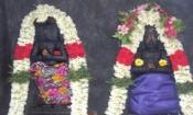 செய்யாறு நட்சத்திர கோவிலில் நாக தோஷ நிவர்த்தி பூஜை