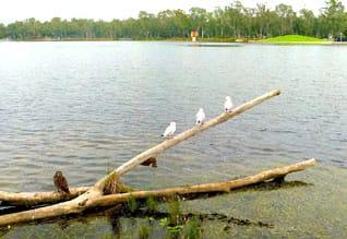 நீர் நிலையை உயர்த்தினால் வரி தள்ளுபடி