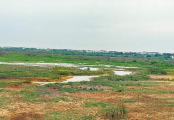 தொழிற்சாலை கழிவு, மருத்துவ கழிவுகளால் விஷமாகும் செம்பரம்பாக்கம் ஏரி நீர்