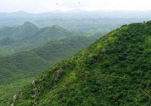 Government, green wall,  India, பசுமை சுவர், இந்தியா, குஜராத், டில்லி, ஹரியானா,