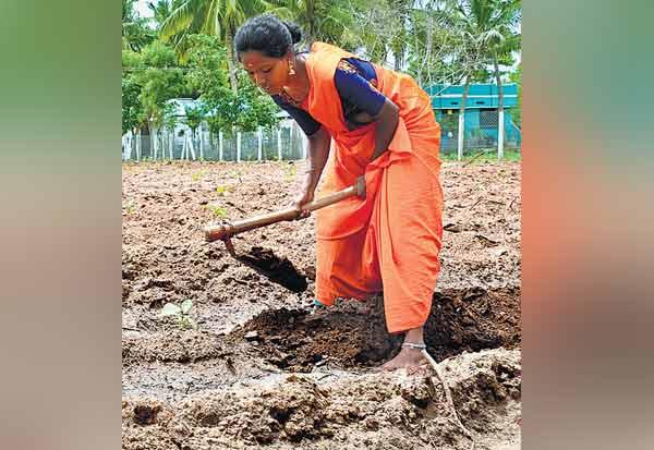 தஞ்சாவூர், விவசாயி, பி.டெக்., பட்டதாரி பெண், ஆலோசனை, Tanjore, Former, B.tech student,  agriculture