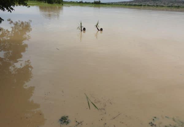 கம்மாபுரம் ஏரி கரை உடையும் அபாயம்சம்பா சாகுபடி நெற்பயிர்கள் ஏற்கனவே நீரில் மூழ்கல்