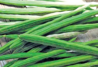 மரத்தில் ஏறியது முருங்கை: கிலோ ரூ.800