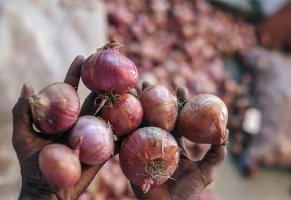 onion,வெங்காயம்,பதுக்கலா, சோதனை, உத்தரவு