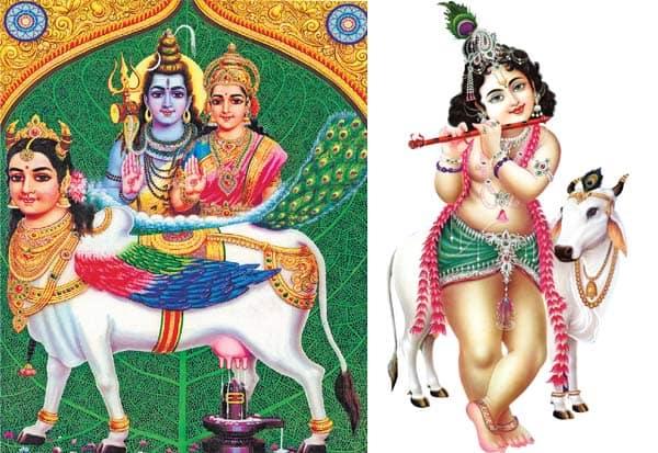 கோமாதா எங்கள் குலமாதா.. குலமாதர் நலம் காக்கும் குணமாதா