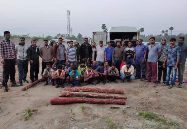 செம்மரம் கடத்தல் : 11 பேர் கைது