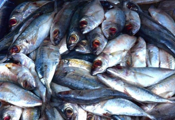 fish,formalin,cancer,fish_market,மீன்,பார்மலின்,புற்றுநோய்