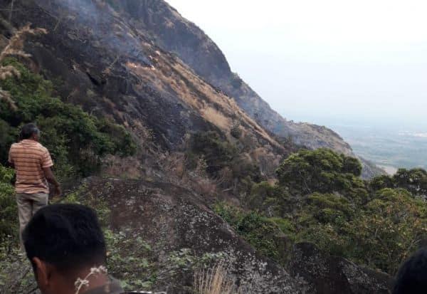போடி அருகே காட்டுத்தீ; பாட்டி, பேத்தி உட்பட 3 பேர் பலி
