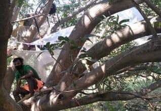 கொரோனா அச்சம்: மரத்தில் தனிமைபடுத்தி கொண்ட இளைஞர்கள்