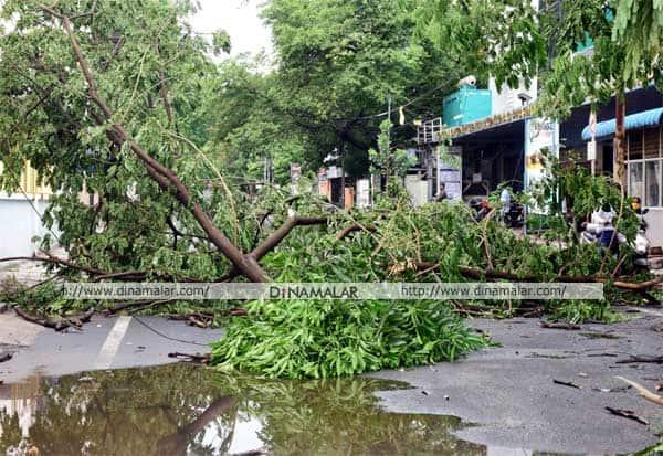 மரம், கோவை, கனமழை, சூறைக்காற்று, மின்கம்பம், மலர், கோயமுத்தூர், Trees, heavy rain, coimbatore, wind, cyclone, TN news, TN district, Tamil Nadu, TN, heavy rainfall