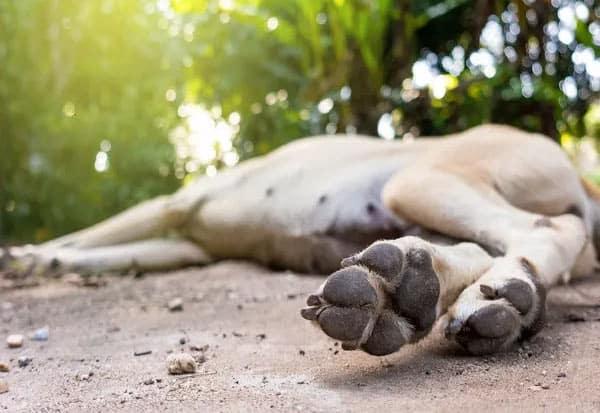 Owner, Death, Pet Dog, suicide, kanpur, up, பெண், வளர்ப்பு, நாய், குதித்து, தற்கொலை