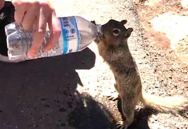 Viral Video, Thirsty, Squirrel, Water, social media