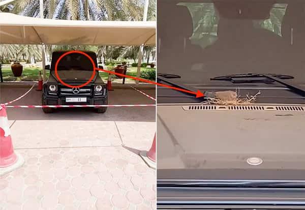 bird, nest, SUV car, Sheikh Hamdan, Crown Prince, Dubai