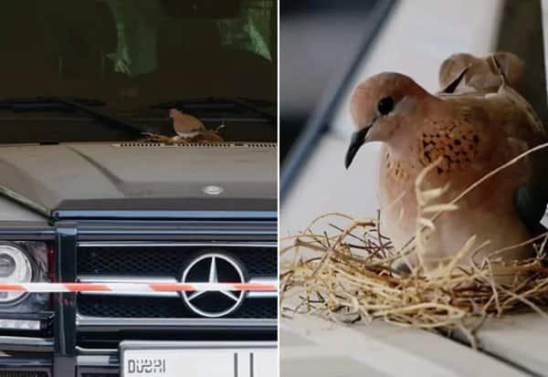 dubai, prince, car, birds, video,துபாய், இளவரசர், பறவைகள், கார், வீடியோ
