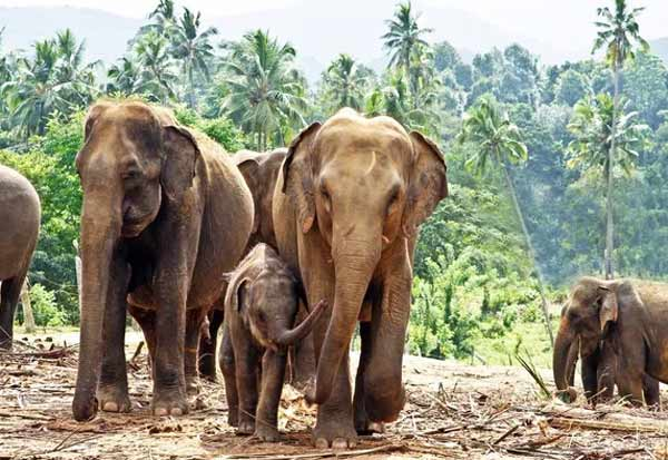 karnataka, tamil nadu, 130 elephants, entered, warning, கர்நாடகா, தமிழகம், 130 யானைகள், தமிழகம், நுழைவு, எச்சரிக்கை
