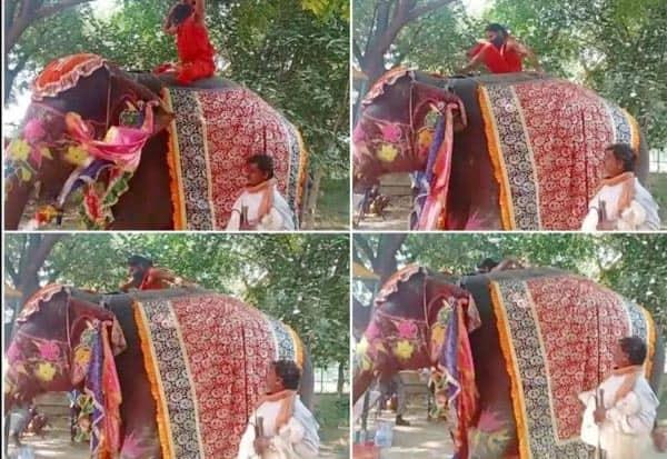 யானை மீது யோகா செய்த போது தவறி விழுந்த ராம்தேவ் Tamil_News_large_2632250