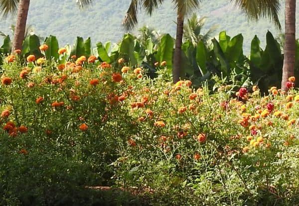 'கொரோனா'வால், உதிரிப் பூக்கள் உற்பத்தி 'டல்' : பண்டிகை காலத்தில் விலை உயரும் வாய்ப்பு