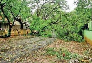 புதுச்சேரி- கடலூர் பகுதிகளில்  மரங்கள் சாய்ந்தன: ...
