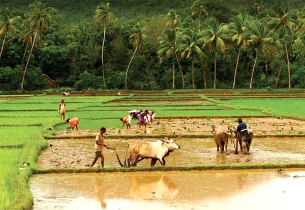 விவசாயிகளை ஏமாற்றியதா காங்கிரஸ் : டுவிட்டரில் டிரெண்டிங்
