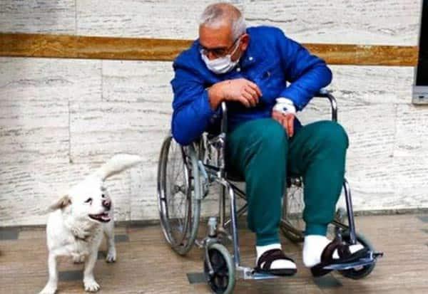SickOwner, Dog, Waited, Hospital