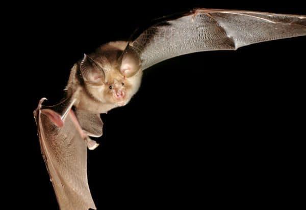 Bats, China, Corona Virus, Covid 19
