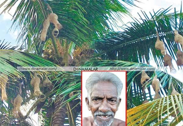 குருவி, தென்னை,விவசாயி