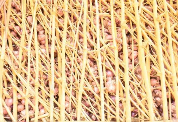 பட்டறை அமைத்து சின்னவெங்காயம் இருப்பு: விலை சரிவால் விவசாயிகள் முடிவு