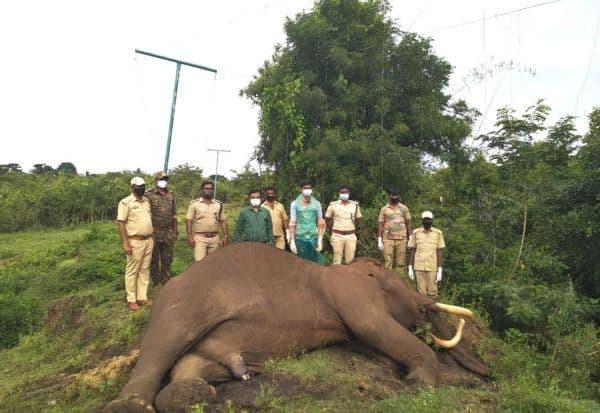'சோலார்' மின்சாரம் தாக்கி 60 வயது ஆண் யானை பலி