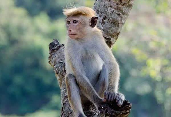 Monkey Heist, Rainy Cash, UP, Skies, Cash, Uttar Pradesh, உபி, குரங்கு, பணம், பண மழை, உத்தர பிரதேசம்