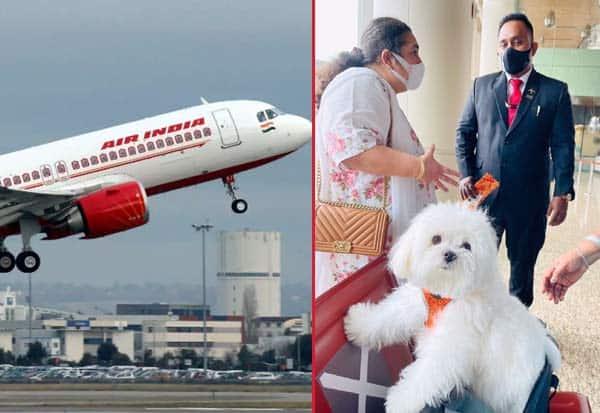 Woman, Books, Entire Business Class, Air India, Travel, Pet Dog, விமான பயணம், பெண், செல்லப்பிராணி, ஏர் இந்தியா, பிஸ்னஸ் கிளாஸ்,