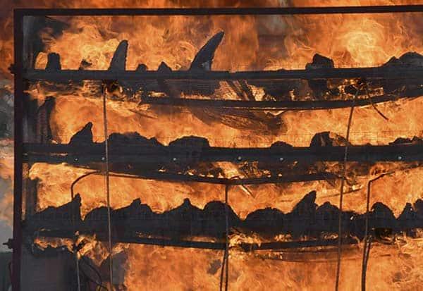 Assam, Rhino Horns, Burns, Creates History, World Rhino Day, அசாம், காண்டாமிருகம், கொம்புகள், எரிப்பு