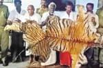 காரில் புலித்தோல் கடத்திய ஐந்து பேர் கைது