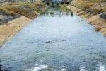 தமிழக அரசின் கோரிக்கை ஏற்பு சென்னைக்கு கிருஷ்ணா நீர் திறப்பு