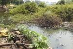 கழிவு நீர் கலப்பால் ஏரி நீர் மாசு