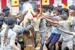 ஆங்காரமாய் பாயும் காளைகள்...  அசராமல் திமில் தழுவும் வீரர்கள்...